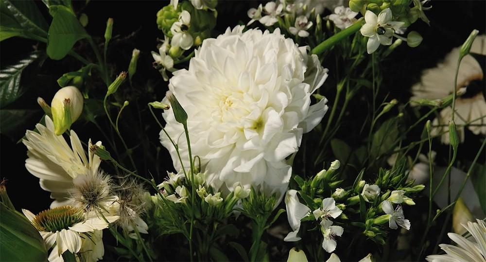 後疫情時代創作短片 —《呼息》 捕捉花草的生命運作,為當下帶來一瞬寧靜