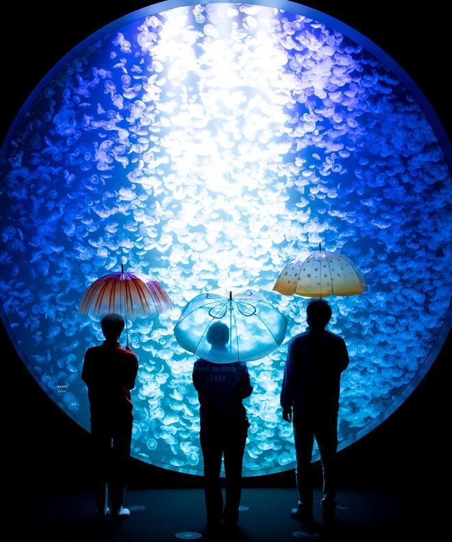 水母雨傘11
