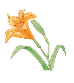 夏天的顏色!韓紅花、藤黃、露草等五個日本夏令代表色 源於傳統的迷人季節色彩