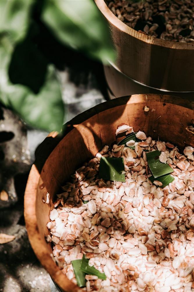 透過發酵過程,可以將可可豆本身的強烈酸味去除-min