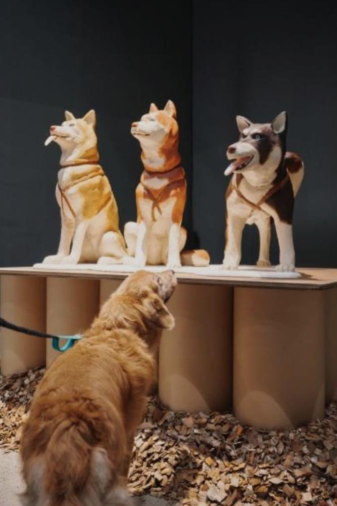首爾國立現代美術館《狗狗的博物館》讓寵物踏入藝文空間2