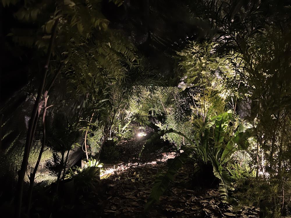 高低落差的結構,如同在森林與岩洞中穿梭