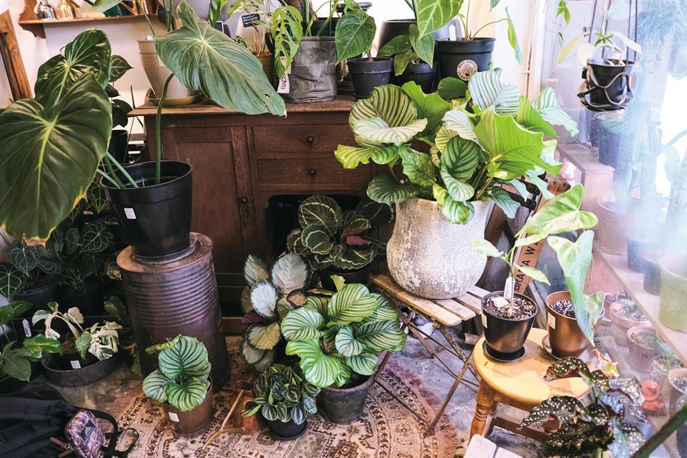販售綠葉的街角小舖 MRS. INOUE植物雜貨店