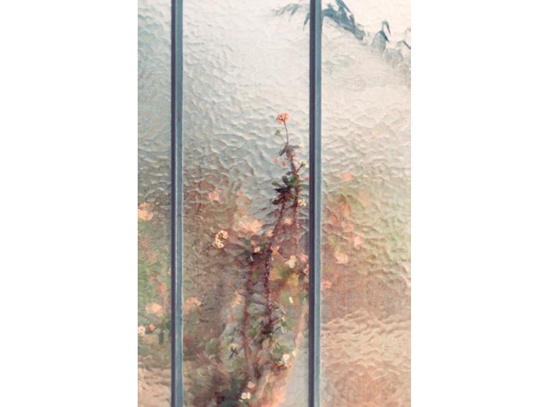 Samuel Zeller植物圖鑑攝影《Botanical》02