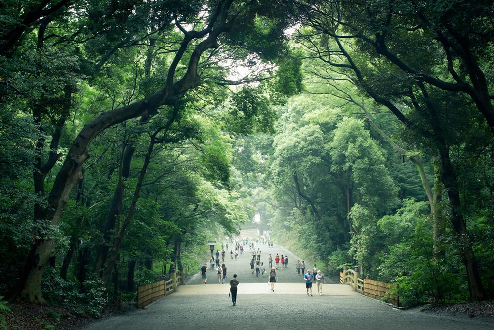 05.明治神宮的森林