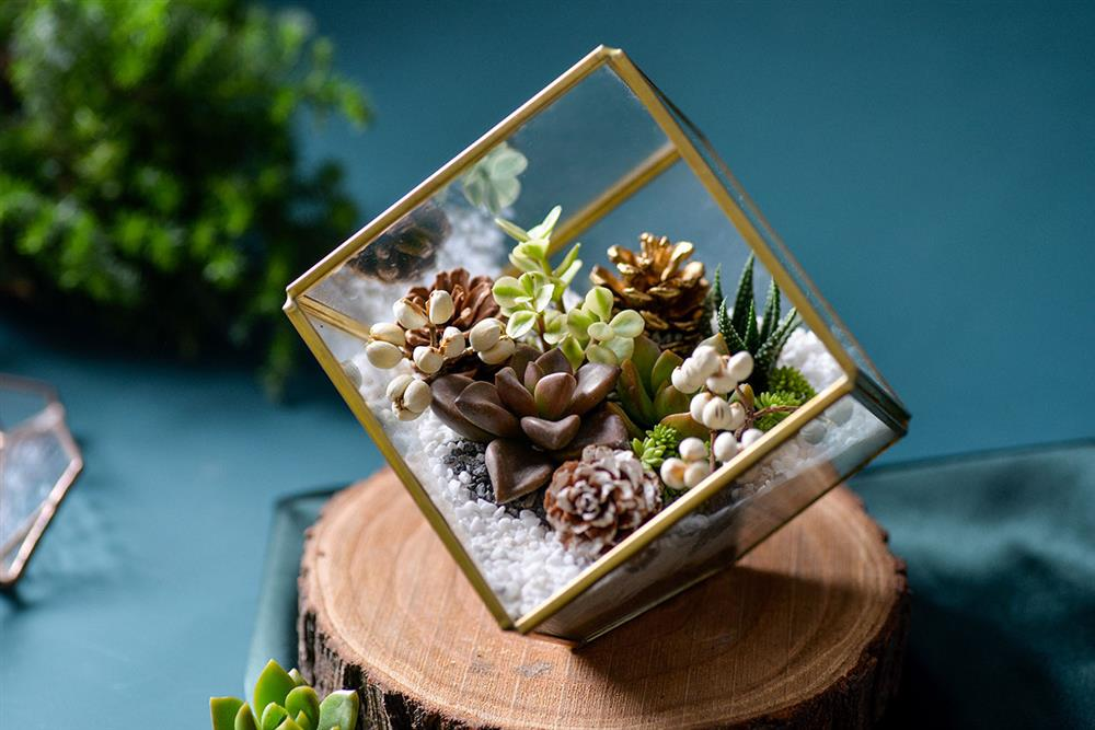 13.聖誕節的植栽課-多肉珠寶盒