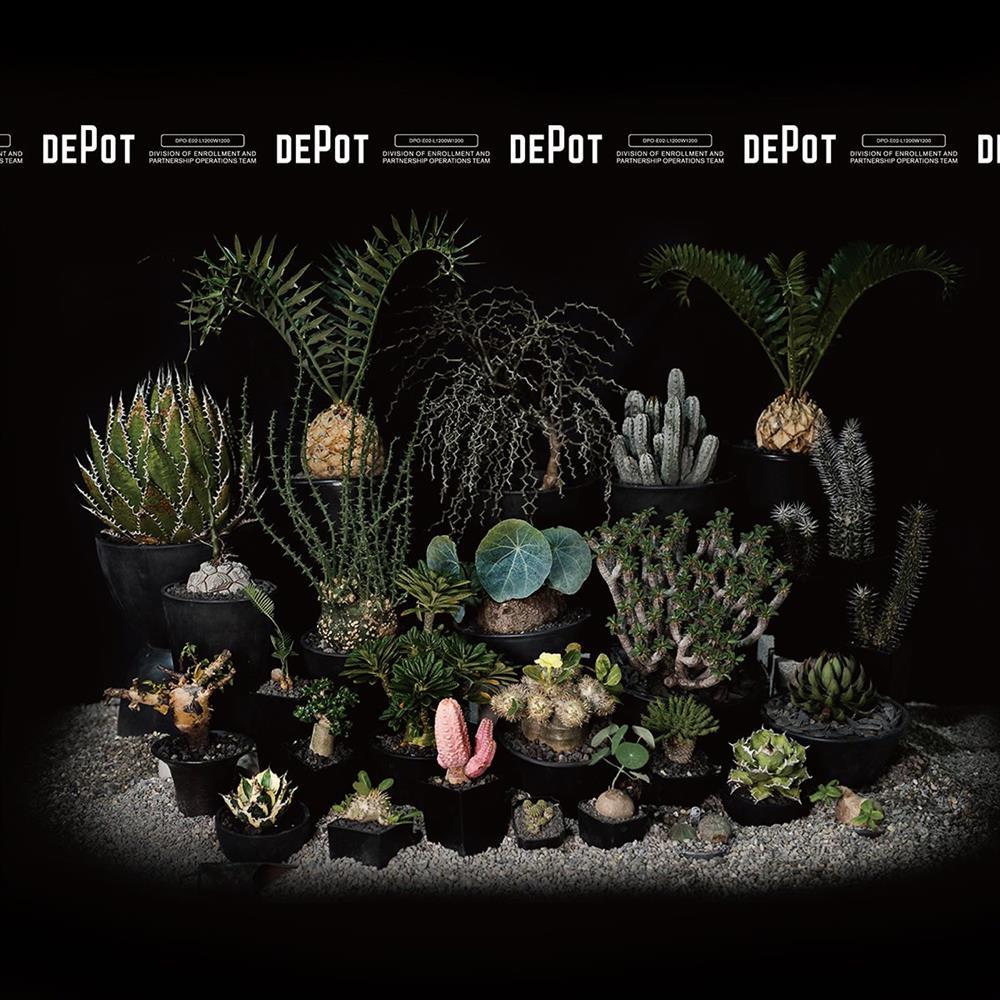 INVINCIBLE新品牌DEPOT「塊跟植物市集」揭幕!80+珍貴物種一次集結