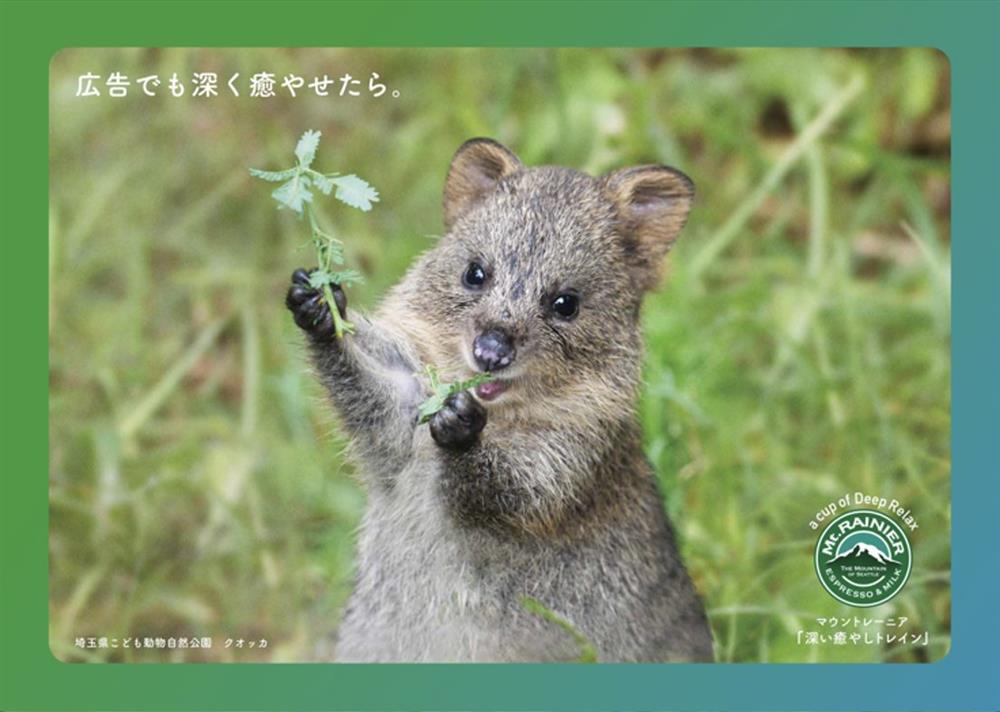 日本Mt.RAINIER讓動物園與水族館的可愛動物躍上咖啡杯身5_20