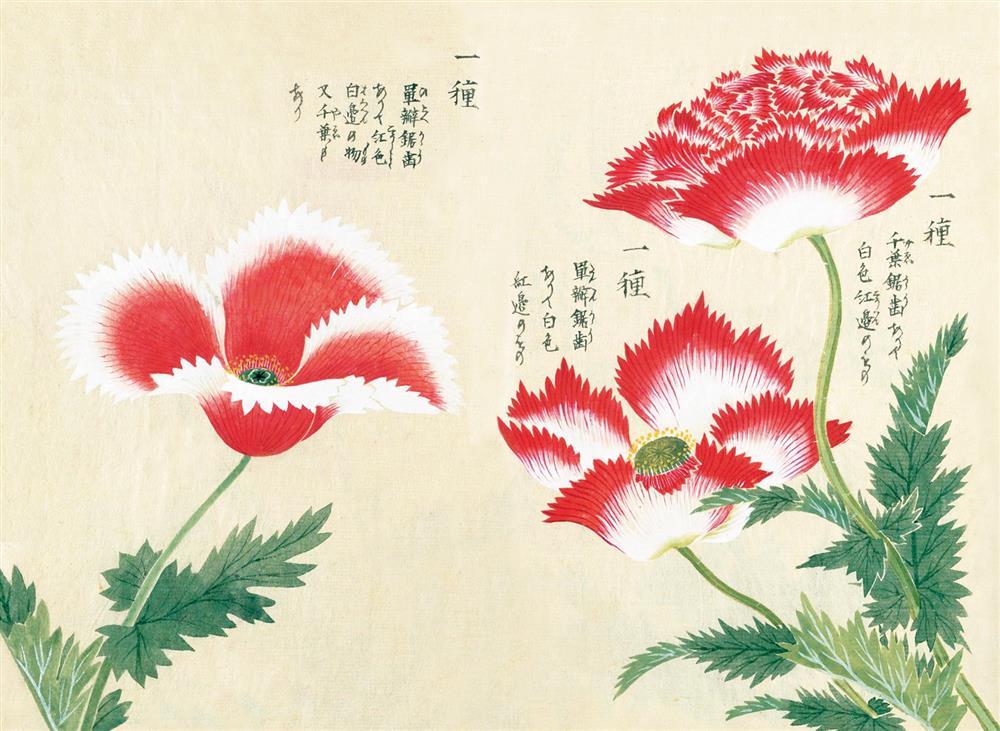 《江戶百花譜》02
