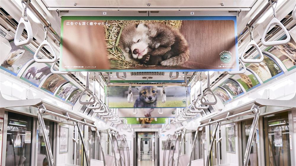 日本Mt.RAINIER讓動物園與水族館的可愛動物躍上咖啡杯身6_19