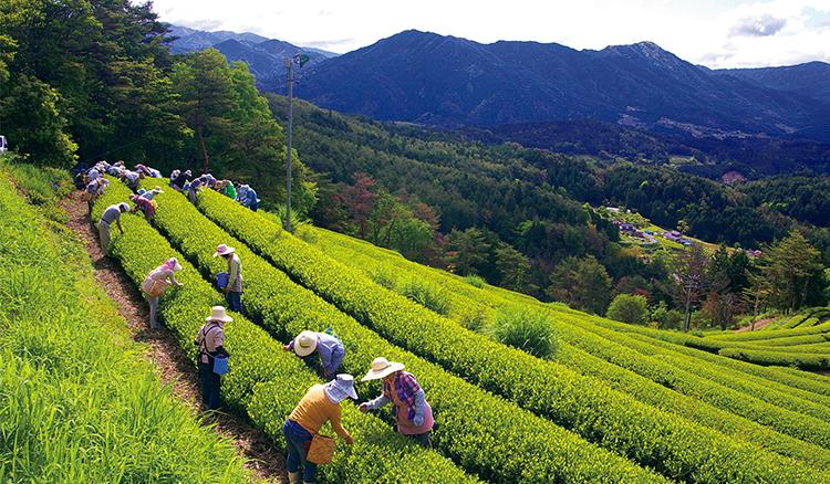 好設計,讓地方重燃元氣!「日本最美的村莊」聯盟守護農山村的景觀與生活_02