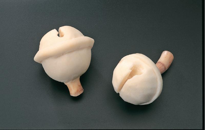 日本主廚奧田高光雕出食材的千變萬化的雙手技藝