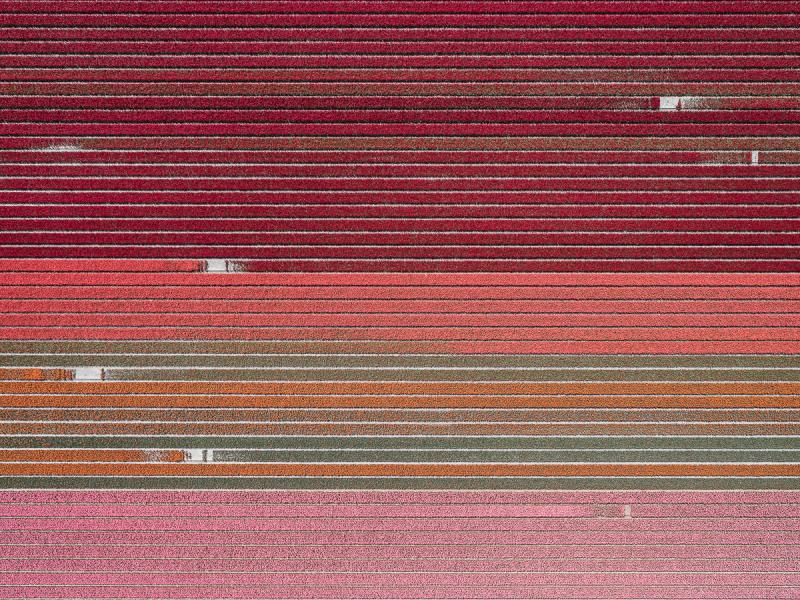 20億株鬱金香齊盛開!德國空拍攝影師Tom Hegen捕捉荷蘭鬱金香花田美景_09