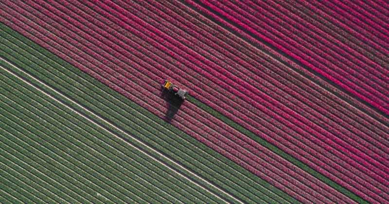20億株鬱金香齊盛開!德國空拍攝影師Tom Hegen捕捉荷蘭鬱金香花田美景