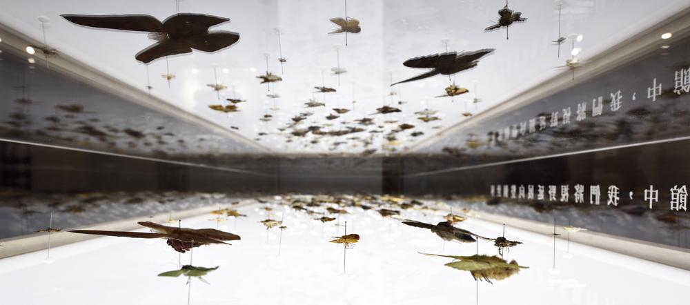 森山蛾特展_展場攝影紀錄-05【照片提供|森3 SUN SUN MUSEUM、攝影|汪德範】