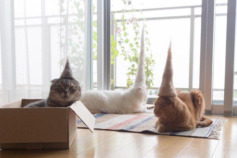超療癒!你家的貓咪有帽子了嗎?日本攝影師為貓咪量身打造一頂超Q萌帽子!
