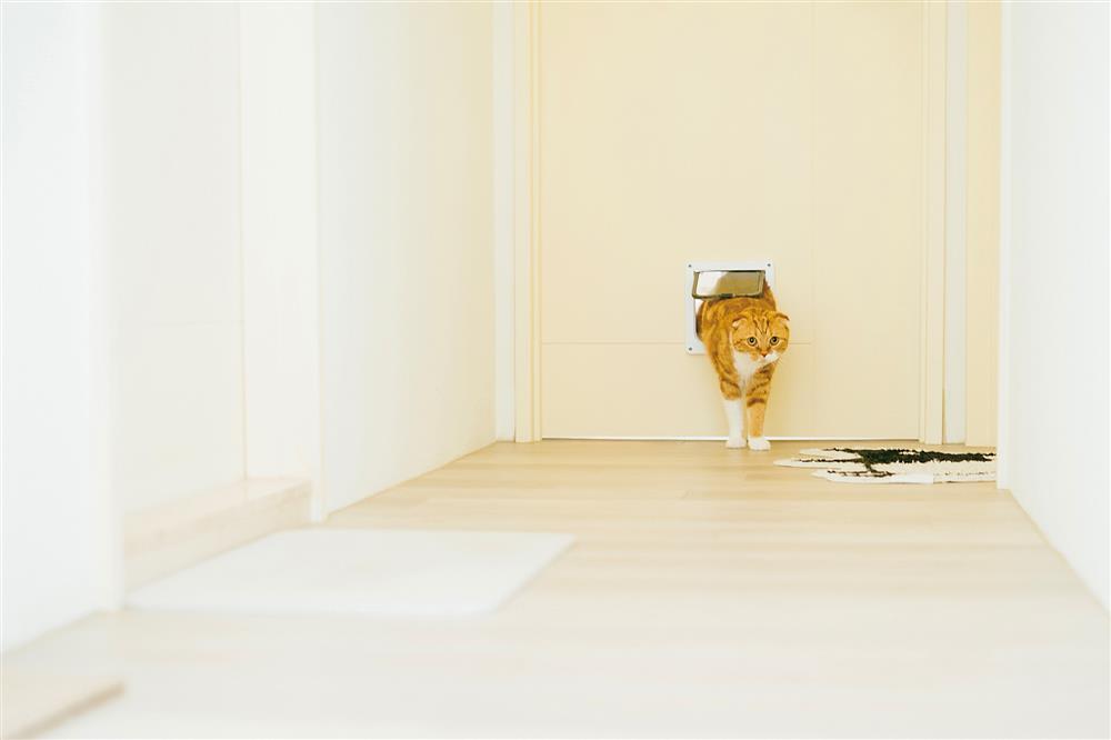 貓派與犬派的設計生活