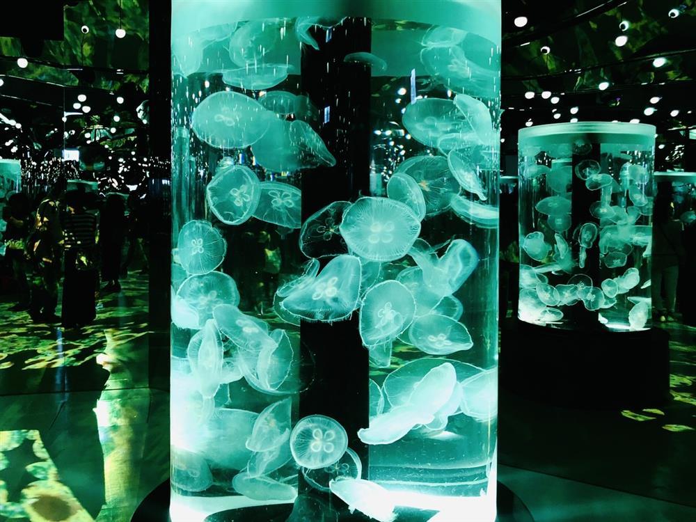 桃園「Xpark」水族館4大展區亮點!