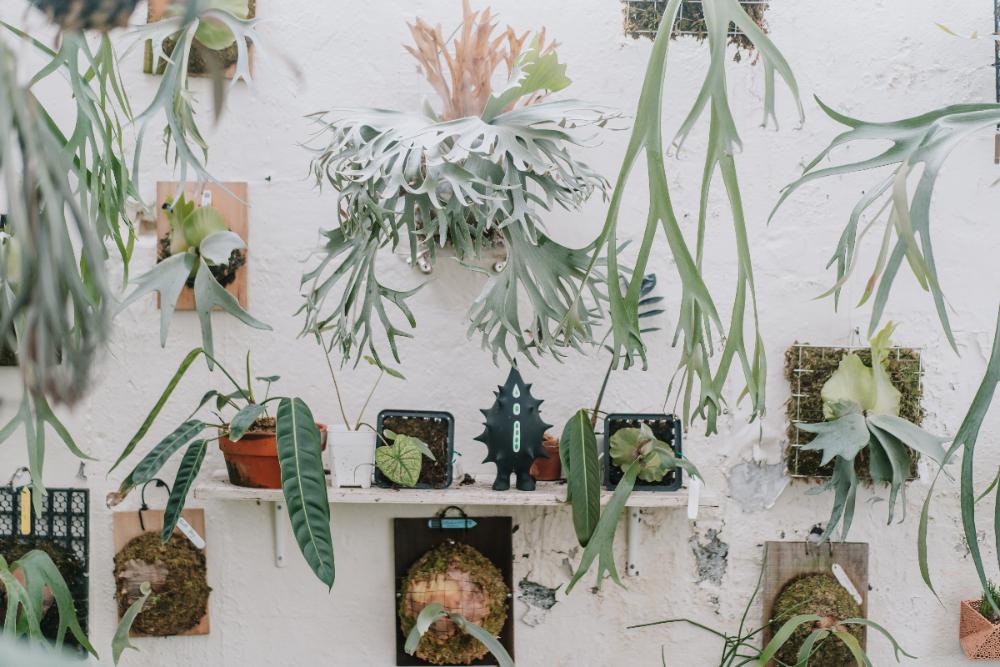 植物生活_陳普04