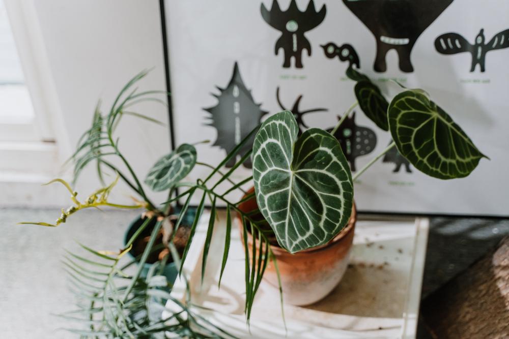 植物生活_陳普06