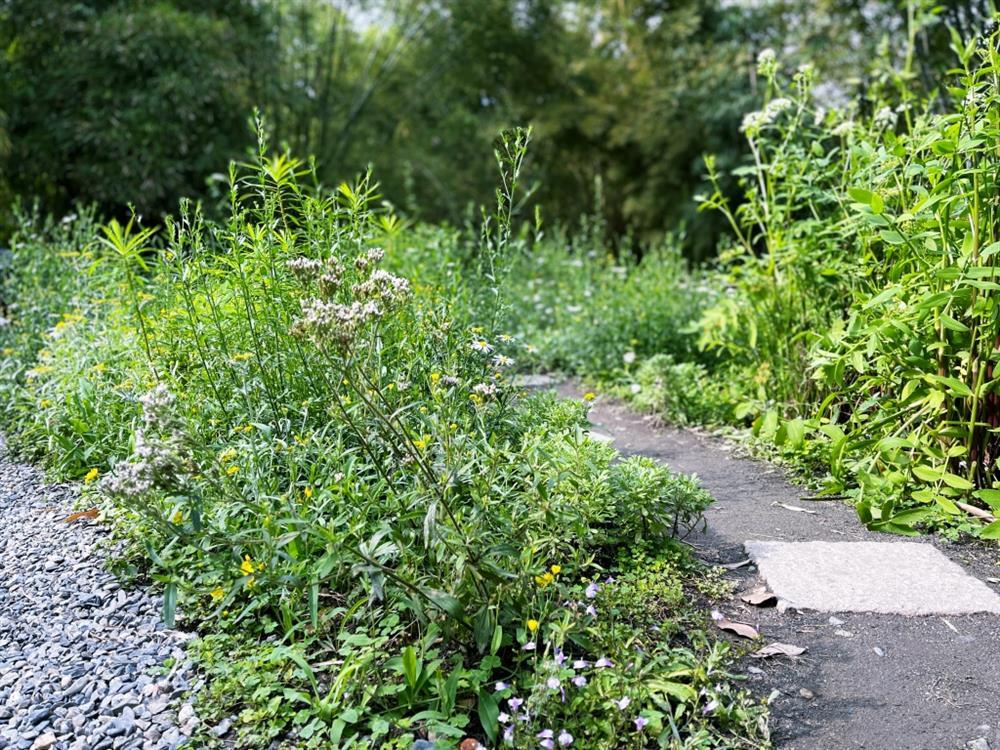 植物園「野花園」尋寶3