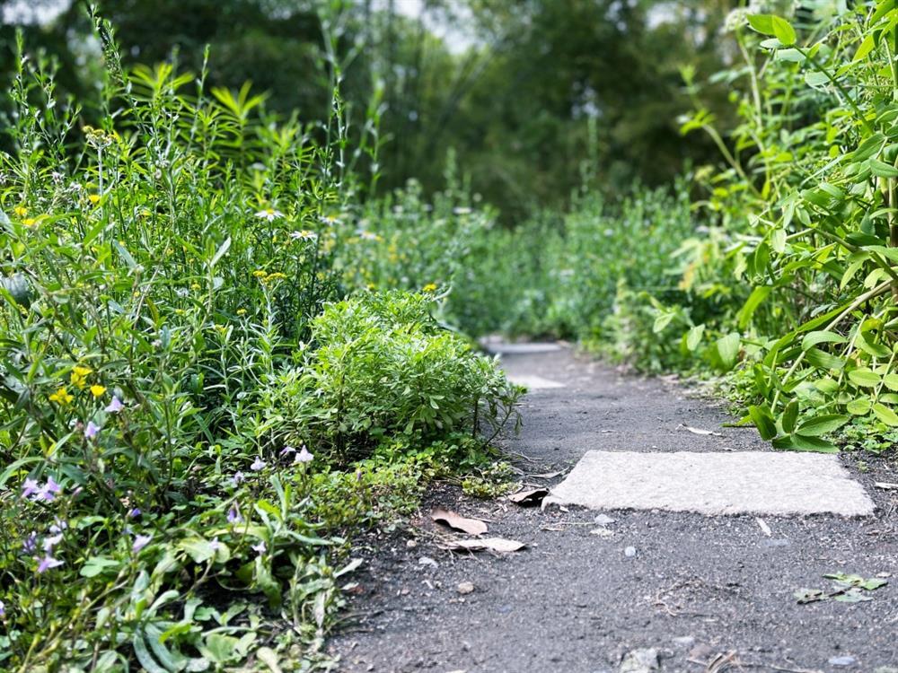 植物園「野花園」尋寶5