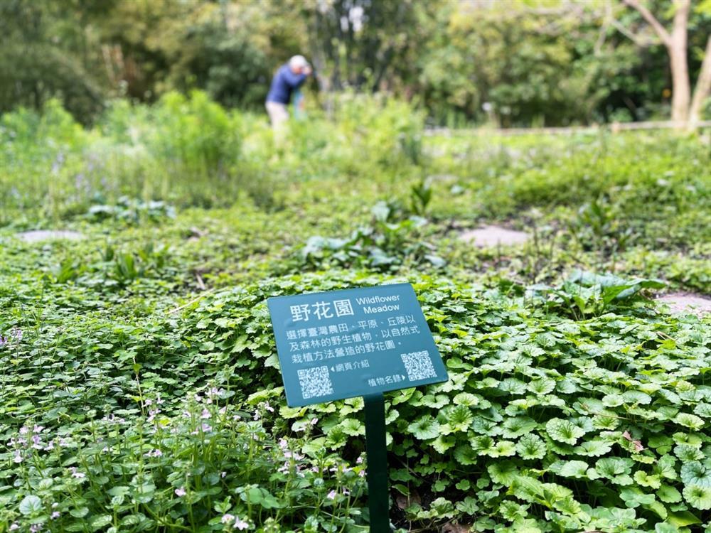 植物園「野花園」尋寶7