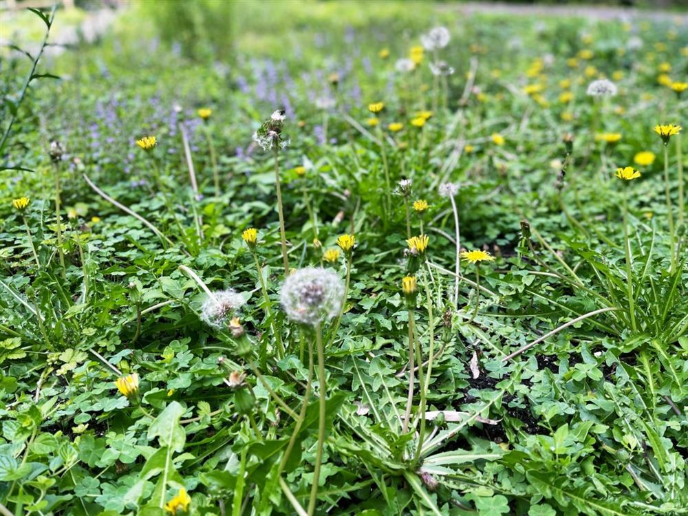 植物園「野花園」尋寶6