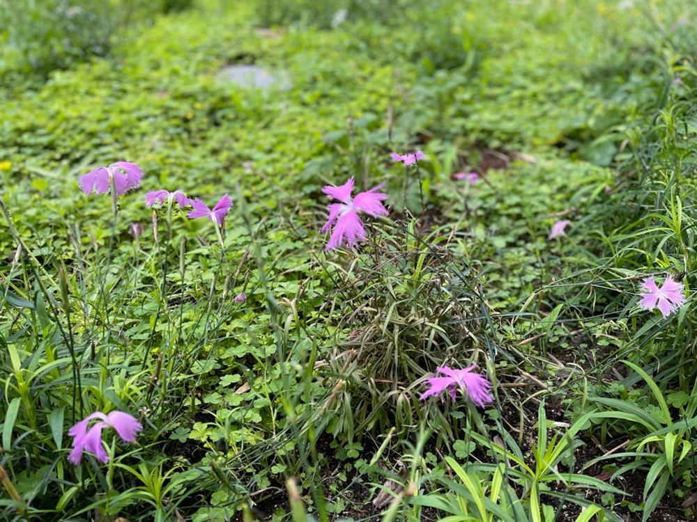 植物園「野花園」尋寶9