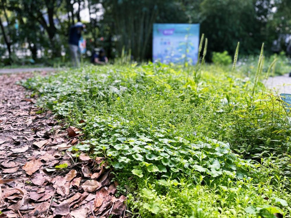植物園「野花園」尋寶4