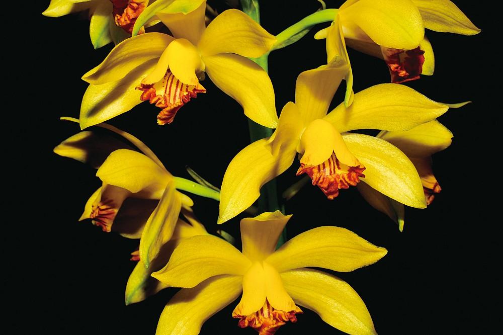 3萬種植物齊聚全世界最大的植物方舟 辜嚴倬雲植物保種中心