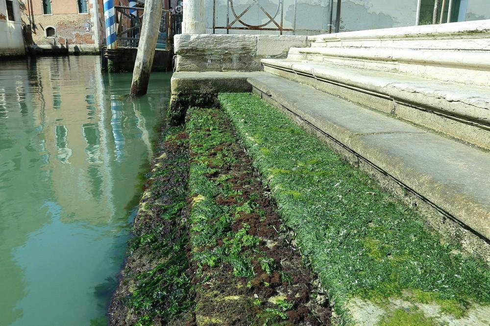 水藻製成的郵票!義大利設計師Pablo Dorigo Sempere回收威尼斯湖水藻打造環保再生設計_02