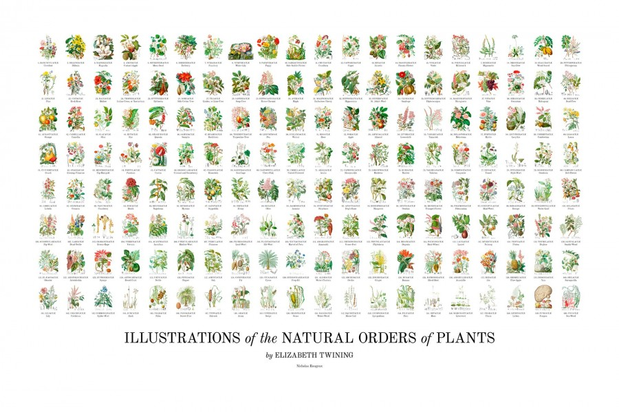 《Illustrations of the Natural Orders of Plants》Elizabeth Twining