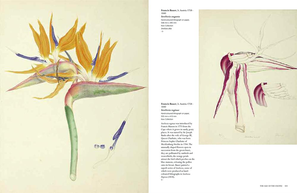 pages_from_treasures_of_botanical_art_2018_v11-2